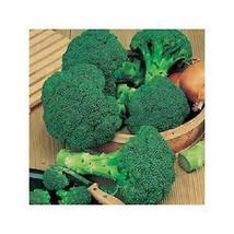 100 seeds Green Sprouting Broccoli Non-GMO Heirloom seeds - $10.00