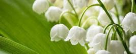 LILY OF THE VALLEY   COLOURED CROSS STITCH KIT - $34.72
