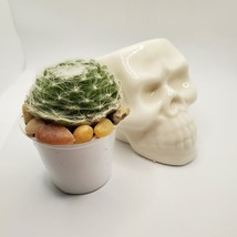 "Sempervivum Succulent in Ceramic Skull Planter 3.5"", Hens & Chicks Live Plant image 2"