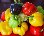 W red green black sweet bell hot pepper seeds vegetables fruit paprika.jpg 640x640 thumb155 crop