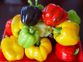 100pcs 4 Color Yellow Red Green Black Sweet Bell Hot Pepper Seeds Vegeta... - $2.18