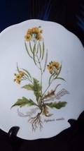 Vohenstrauss Johann Seltmann Bavaria Germany Salad Plate Diplotaxis Muralis - $9.50