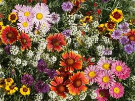 SHIP FROM US 70,000 Butterfly Bees Wildflower Mix Seeds Pollinator Blend... - $47.96