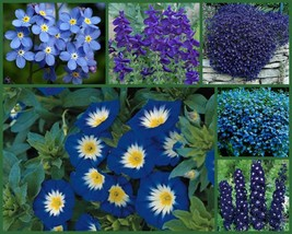 """I've Got the Blues"" Blue Flowers Special, 6 Full Size Packs, Blue Flower Seeds! - $22.39"