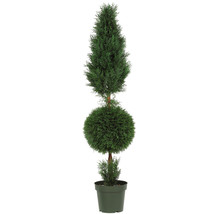 5-Ft. Cypress Ball and Cone Silk TreeIndoor or Outdoor - €181,15 EUR