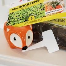 Fox Planter with Microgreens Seed Kit, gardening gift, ceramic animal planter image 5