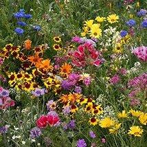 2000 Seeds Deer Resistant Wildflower Seed Mix, 13 Species - $8.99
