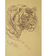 Royal Bengal Tiger Art Print #34 Stephen Kline WORD DRAWING A Great Big Cat Gift - $49.95