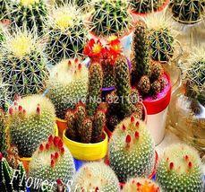 30 mixed cactus flower seeds mini bonsai cactus Hardy Heat Tolerant - $2.00