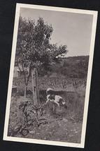 Antique Vintage Photograph Adorable Puppy Dog Running Around in Field - $5.94