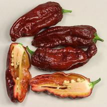 7 POD Chaguanas Chocolate,10 Semillas,Seeds,Capsicum chinense (108) - $2.27