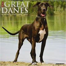 Just Great Danes 2019 Wall Calendar Dog Breed Calendar - $14.38