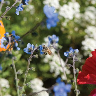 Bee Feed Mix Flower Seed / Bee Feed Flower Seeds - $17.00