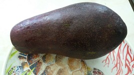 5'' to 8'' avocado tree live aguacate  fruit Gardening - Outdoor Living - $60.99