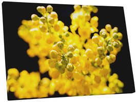 "Pingo World 0809QH8OVC4 ""Yellow Mahonia Flowers"" Gallery Wrapped Canvas Wall Art - $53.41"