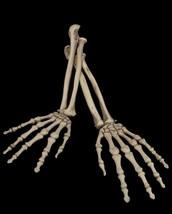 2pc SET-Human Anatomy Bones-SKELETON ARMS-Zombie Pirate Prop Building De... - $16.80