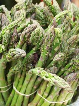 1 Packet of 125 Seeds UC72 Asparagus - Asparagales Asparagaceae - Mary's Grandau - $9.77