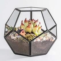Newitty Geometric Pentagon Glass Plant Terrarium for Succulent Air Plant... - $26.49
