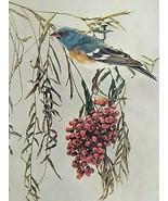 1897 Picture Lazuli Bunting Bird Animal Art Wall Hanging Nature Study - $15.64