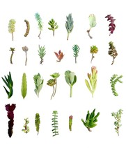"28 Assorted Succulent Cuttings/ 28 Varieties/ 2""-7"" Organic Succulents F... - $25.69"