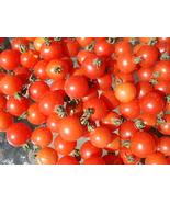 20 Seeds Texas Wild Heirloom Cherry Tomato Sweet Cherry - $5.99