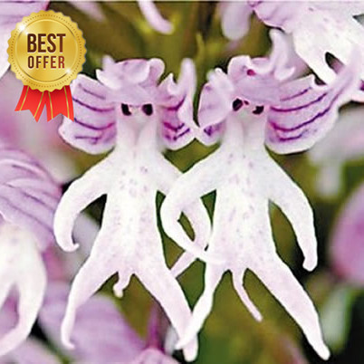 200 Seeds Italian man orchid Home and Garden HOT!!!