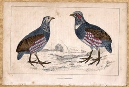 Large Footed Partridges Birds c1860 Hand Colored Lithograph Print - $9.49