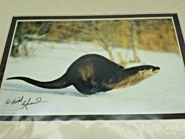 Otter Weasel Snow Winter Keith Szafranski Montana Photograph Picture Mat... - $20.74