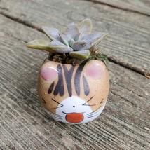 Cat Planter + Ghost Succulent, Kitten Ceramic Pot, Graptopetalum Paraguayense image 2