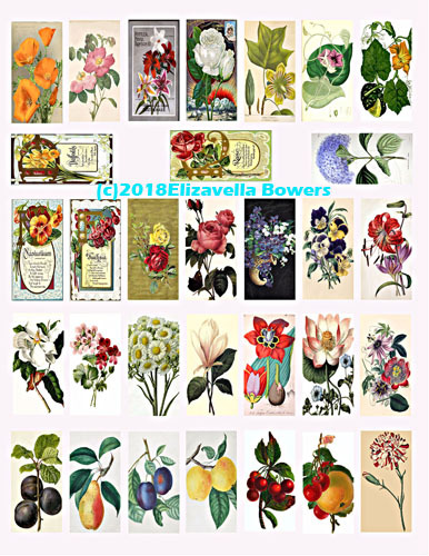"vintage flowers fruit domino collage sheet 1x2"" images digital download printabl"