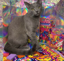 $22UPS1Day/$6USPS LISA FRANK Easter Puzzle Sealed stickers Rollouts Stamp Kitty image 8