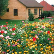 200 Mix Colorful Shade Tolerant Wildflowers Seeds Wild Flower Garden Flower - $5.09