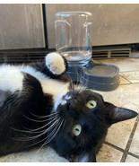 Gravity cat dog Pet Waterer 0.5 gallon - $11.87