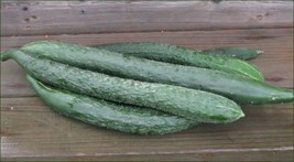 SHIP From US, 50 Seeds Japanese Long Burpless Cucumber Seeds, Vegetable Seed AM - $30.99