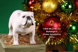 Collectible Figure Accessory 2pcs/set 1/6 Mr.Z NO.021 English Bulldog 4.... - $89.23