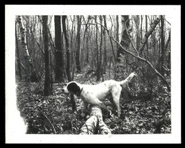 Pointer Dog Polaroid Land Photograph Sporting Dog Animal Photography - $12.99
