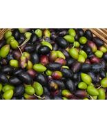 Fresh Green/ Black Raw Olive for curing- 3 lbs. - $59.99