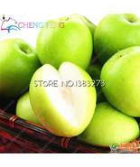 Hot New 10pcs/bag Sweet Jujube Planting bonsai Chinese Organic Ziziphus ... - $8.18