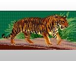 Tigerstroll47x26 thumb155 crop