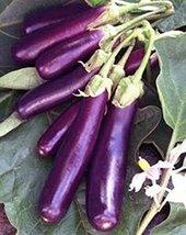 Eggplant , Long Purple Eggplant seeds, Heirloom, Organic, Non Gmo, 25 se... - $3.90