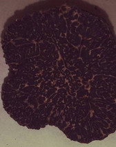 European Fresh Black Winter Truffles > End of Season Sale< Amaze your Gu... - $75.00