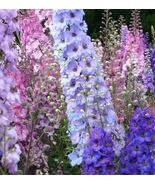 1000 Larkspur seeds Giant Imperial Mix Delphinium Consolida CombSH A16 - $25.41