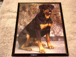 ROTTWEILER 8X10 FRAMED PICTURE - $13.26