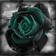 100 Seeds Black Rose Seeds Dark Green Rose Garden Bonsai Perennial Plant... - $5.99