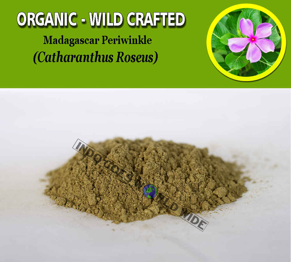 Primary image for POWDER Madagascar Periwinkle Catharanthus Roseus Organic Wild Crafted Herbs
