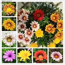 100 Pcs/bag Gazania Flower Bonsai Flower Seeds Garden Balcony Plant Semi... - $2.18