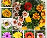 Er seeds garden balcony plant semillas gazania splendens chrysanthemum.jpg 640x640 thumb155 crop