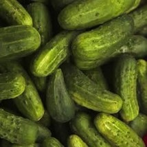 50 Seeds National Pickling Cucumber Non-gmo Heirloom Seeds - $1.57