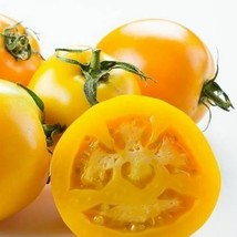 Tomato Golden Jubilee Vegetable Seeds (Lycopersicon lycopersicum) 50+Seeds - $5.44+