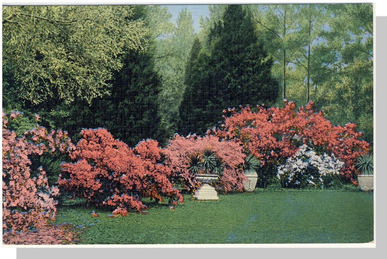 Alabama al postcard bellingrath gardens azaleas alabama for Bellingrath coupons